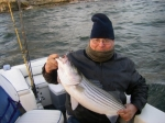 Lake Texoma Striper Fishing