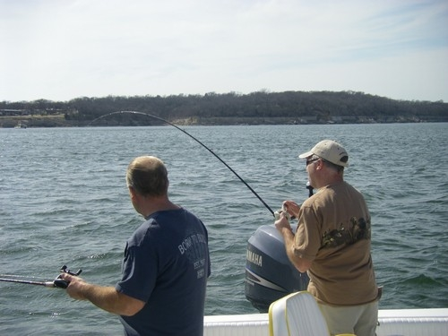 Lake Texoma Stripers caught in the new falcon!