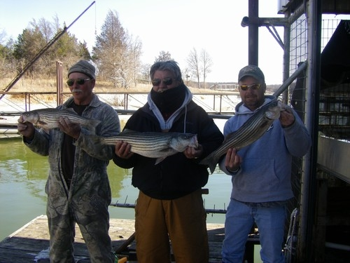 Fishing on Lake Texoma stripers with Stripers Inc Fishing Guide Service