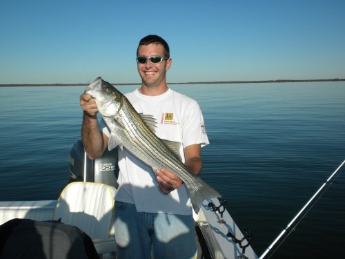 Stripers cuaght on Lake Texoma with fishing guide Brian Prichard