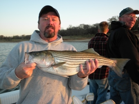 Stripers caught in Lake Texoma with fishing guide Brian Prichard